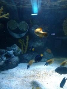Smiler Sealife