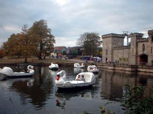 swans2-500x375